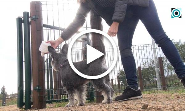 Les regidories de Salut i Serveis Generals impulsen una campanya de sensibilització pels propietaris dels gossos