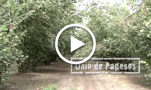 Segell Selvatà: Unió de Pagesos