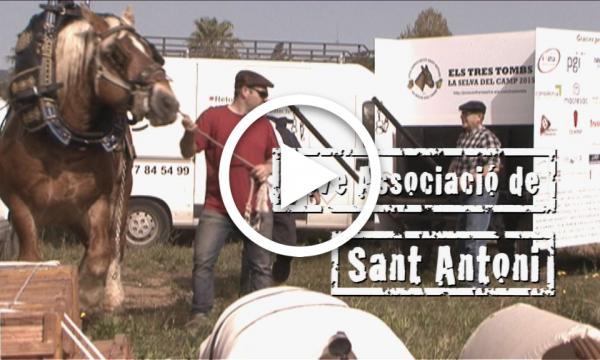 SEGELL SELVATÀ: Jove Confraria de Sant Antoni